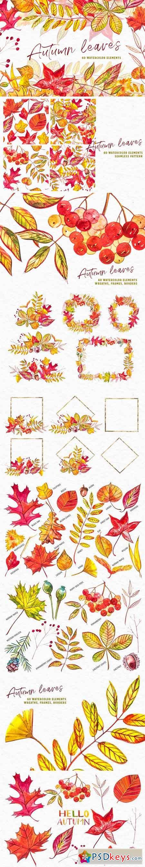 Autumn leaves 3471675