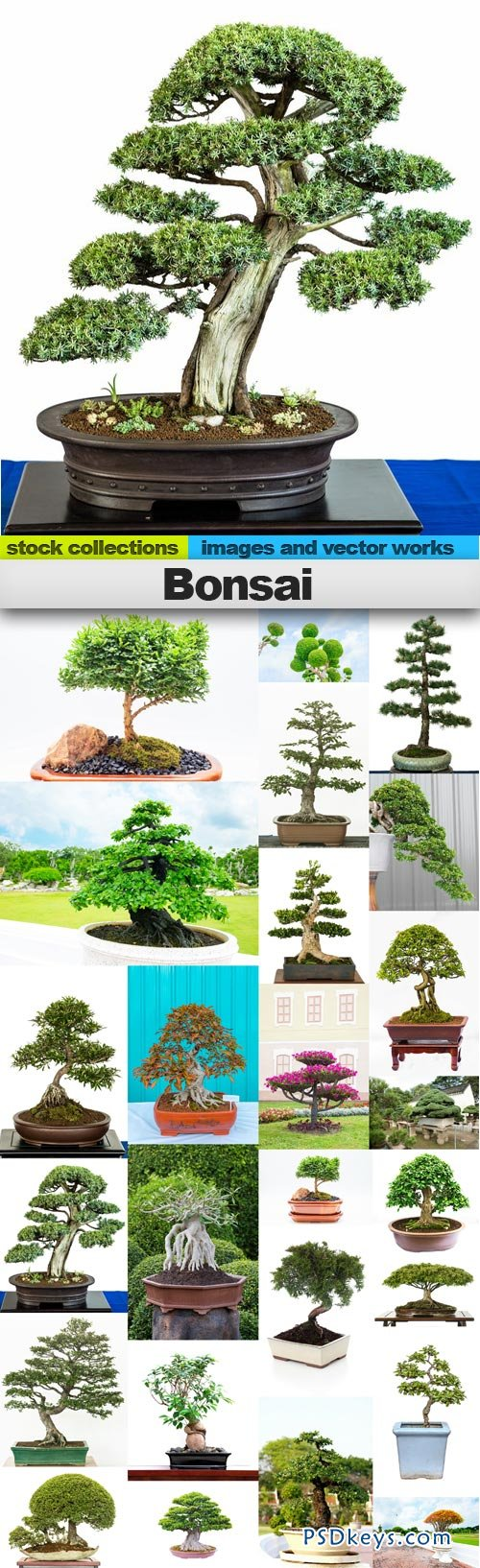 Bonsai 25xUHQ JPEG