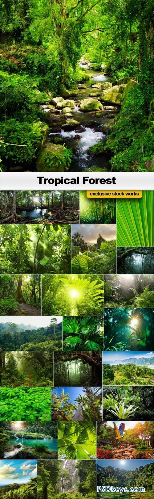 Tropical Forest - 25xJPEGs