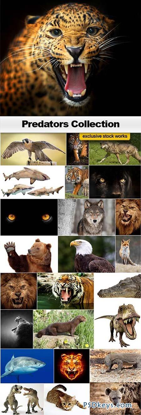 Predators Collection - 25xJPEGs