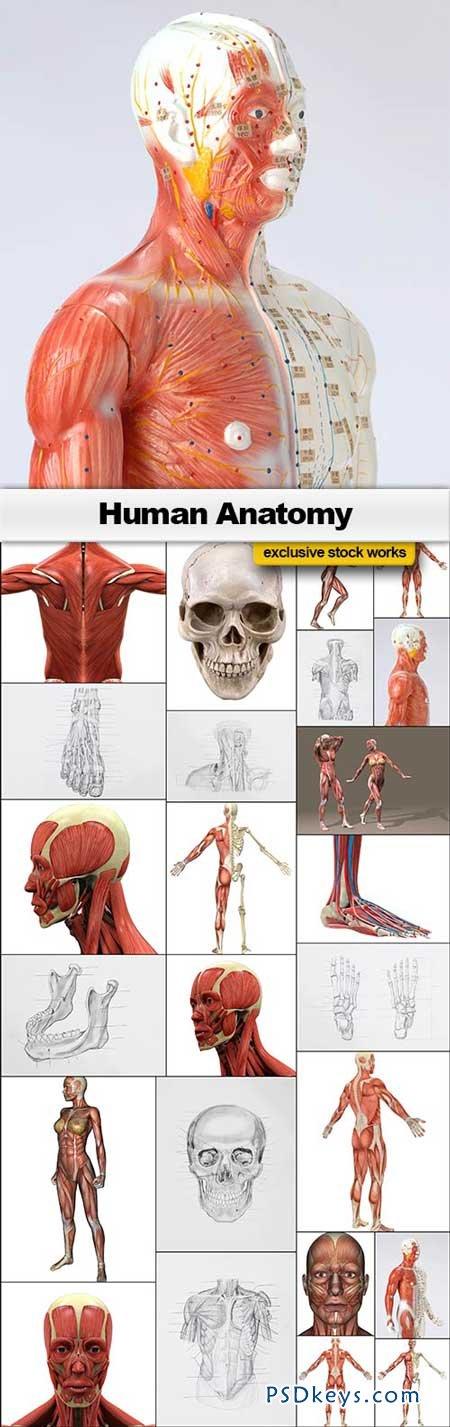 Human Anatomy - 25xJPEGs