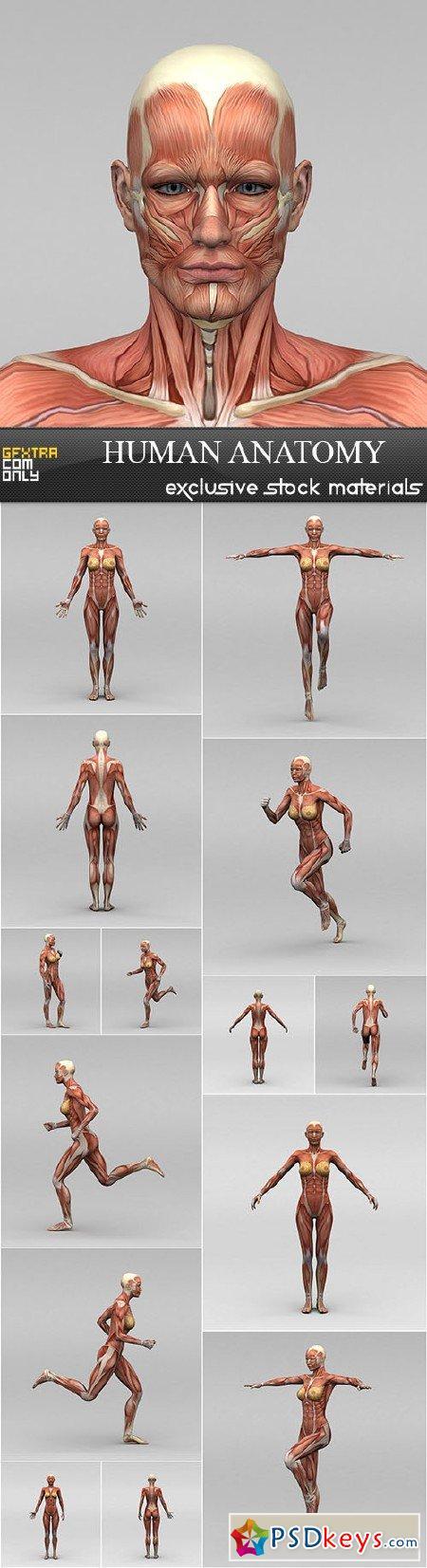 Human Anatomy 15xUHQ JPEG