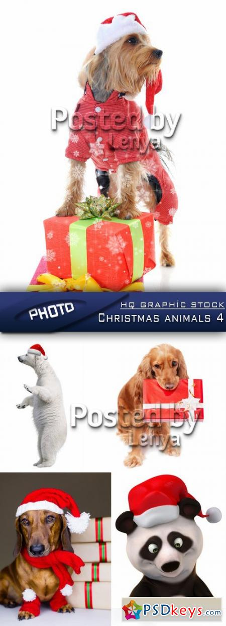 Christmas animals 4