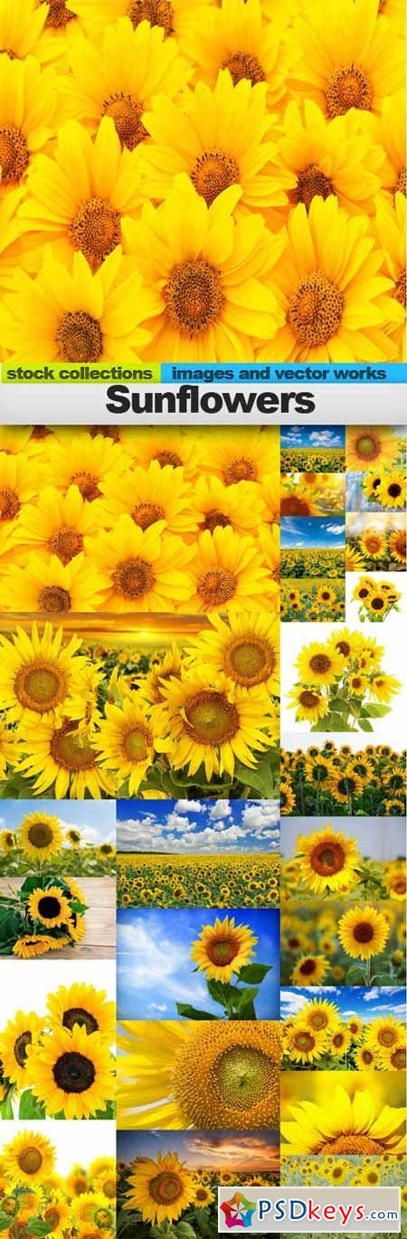 Sunflowers,25 x UHQ JPEG
