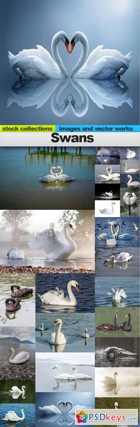 Swans, 25 x UHQ JPEG