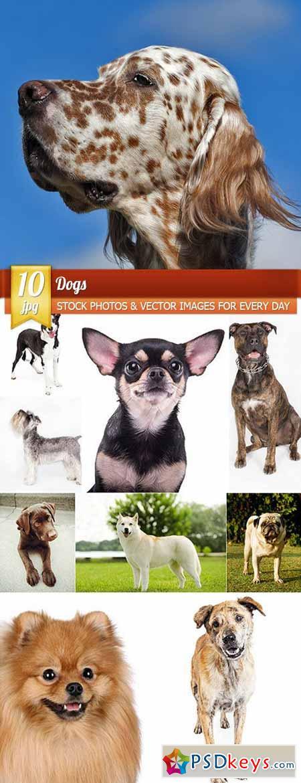 Dogs, 10 x UHQ JPEG