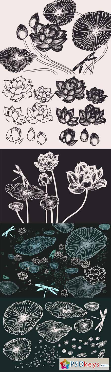 Lotus Flowers & Leaves Drawings 131007