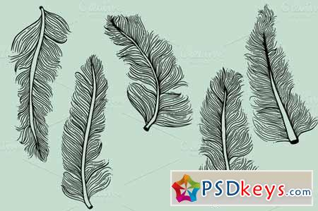 5 Illustrated Feathers 15068