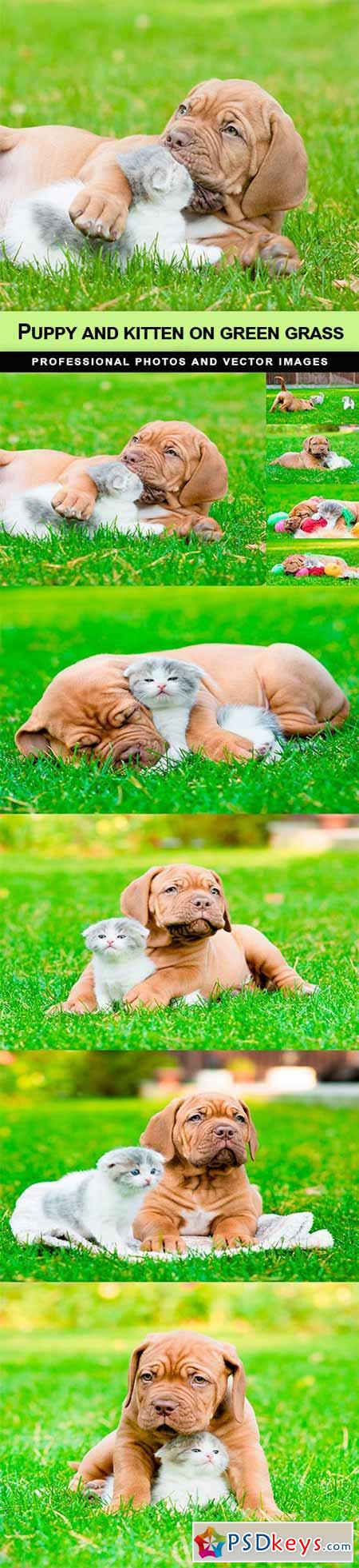 Puppy and kitten on green grass - 9 UHQ JPEG