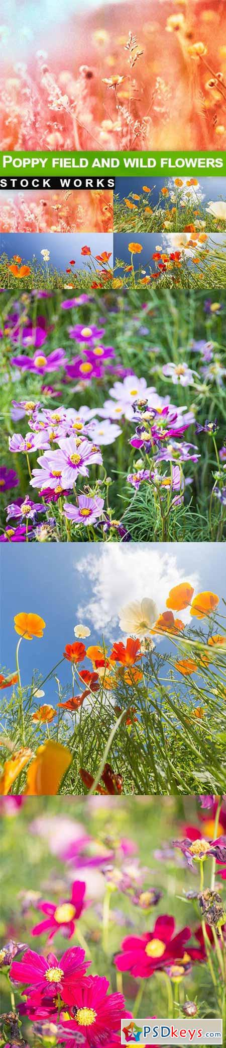 Poppy field and wild flowers - 7 UHQ JPEG
