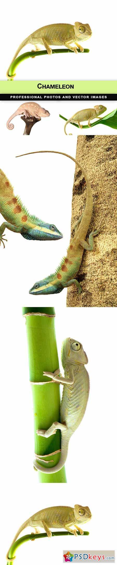 Chameleon - 5 UHQ JPEG