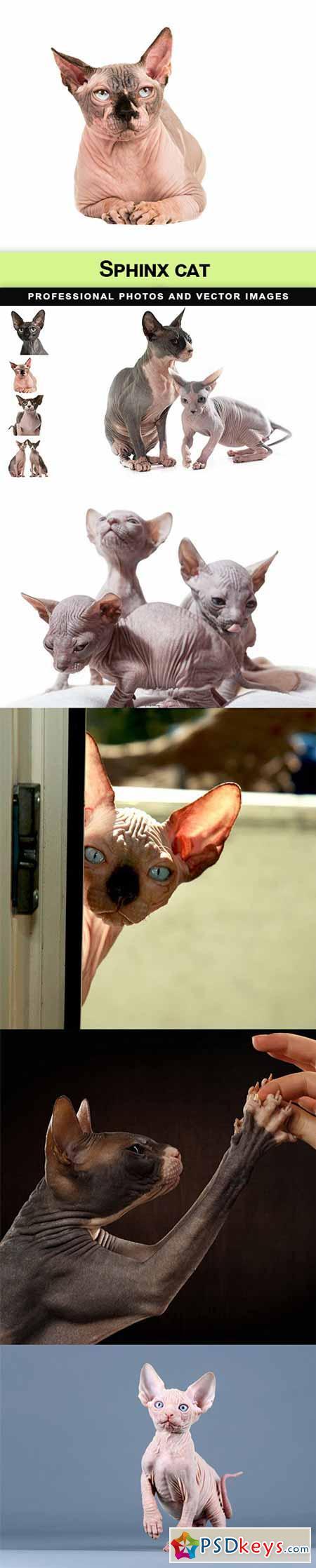 Sphinx cat - 9 UHQ JPEG