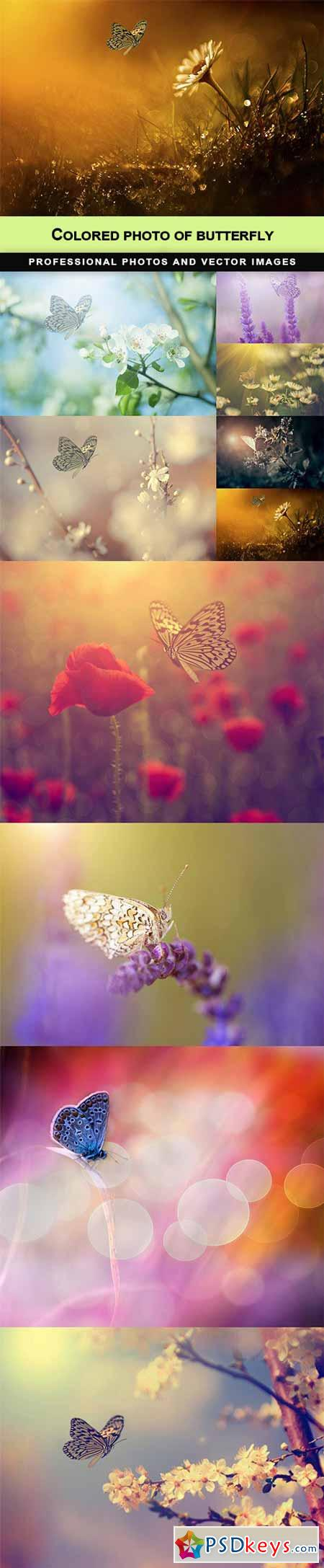 Colored photo of butterfly - 10 UHQ JPEG