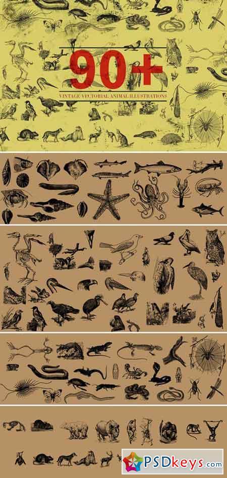 90+ Vectorial Animal Illustrations 412100
