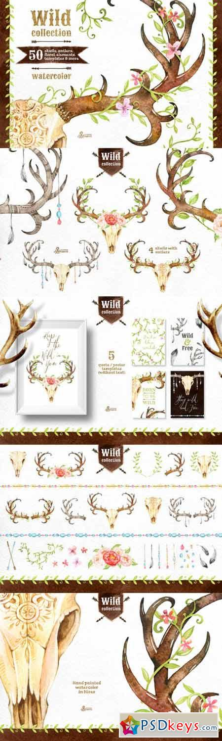 Wild Collection 293347