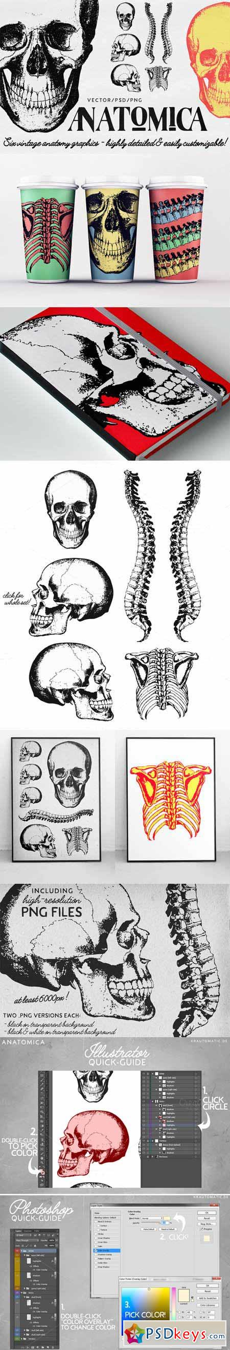 ANATOMICA - vector psd graphics pack 452779