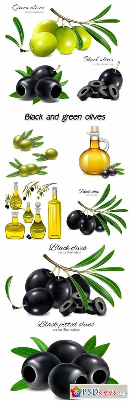 Black and green olives in a vector