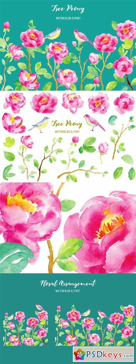 Watercolor Clipart Purple Tree Peony 478779
