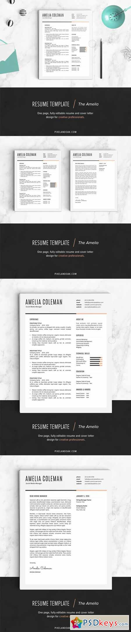 Resume Template The Amelia   Free Download Photoshop Vector
