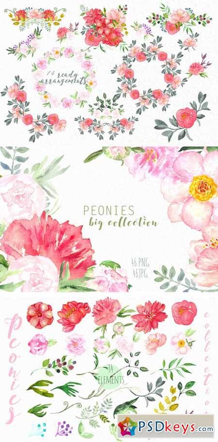 Peonies big collection clip art 509467