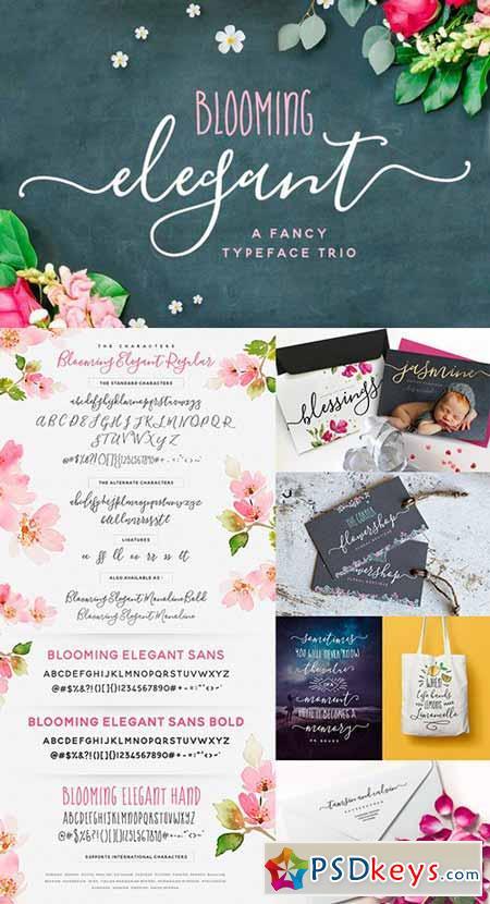 The Blooming Elegant Font Trio 537891 6 FONT! 537891