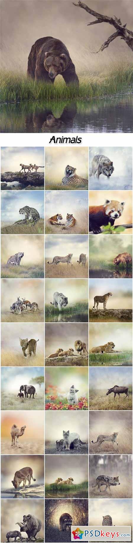 Animals, leopard, wolf, bear, elephant, camel, rhinoceros