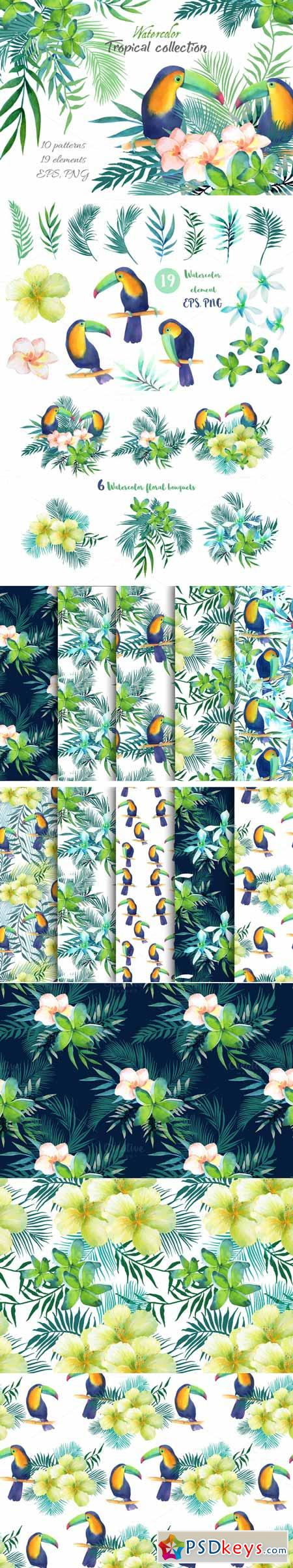 Tropical collection 562316