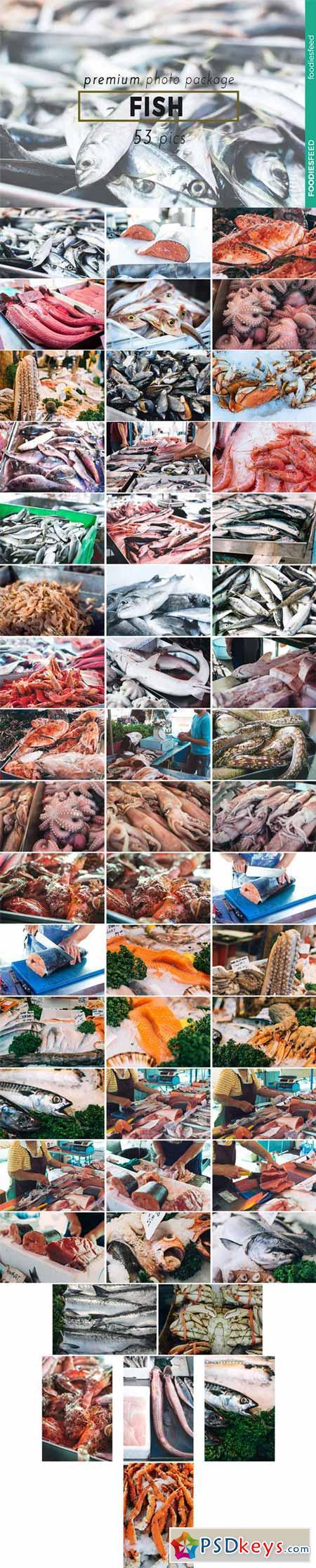 FISH - 53 Premium Photos 505407