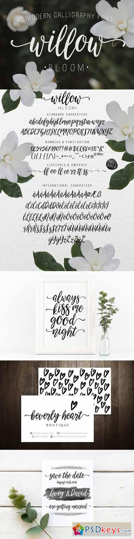 Calligraphy font willow bloom free download