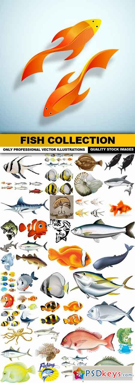 Fish Collection - 45 Vector