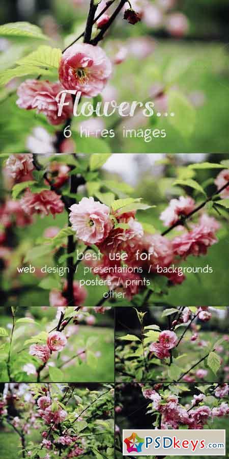 Flowers 673758