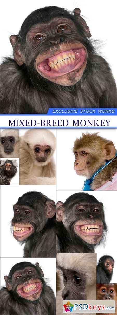 Mixed-Breed monkey 10X JPEG