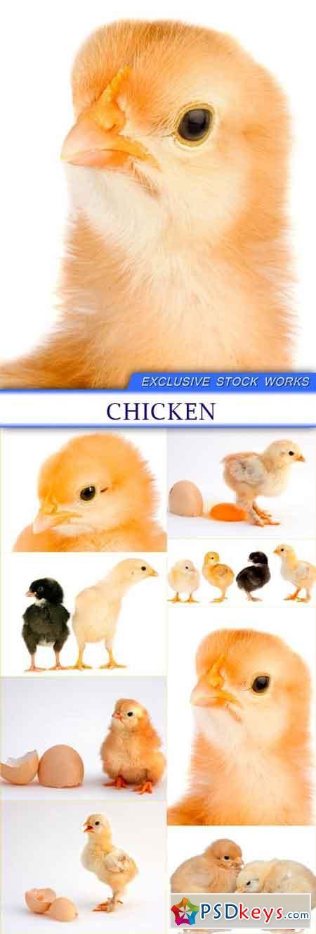 Chicken 8X JPEG