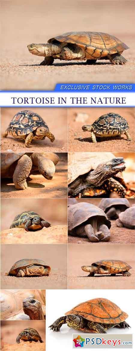 Tortoise in the nature 11X JPEG