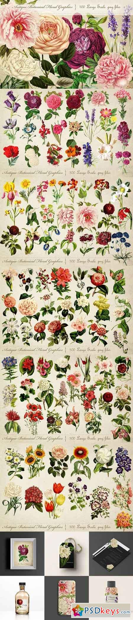 Antique Botanical Floral Graphics 697852