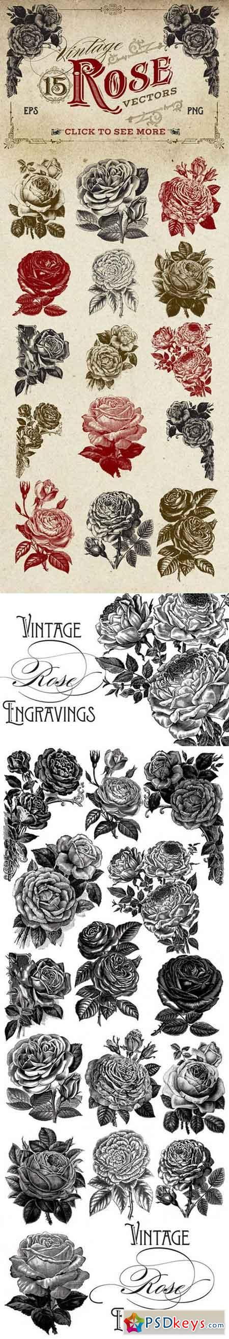 Vintage Rose Vector Graphics 260145