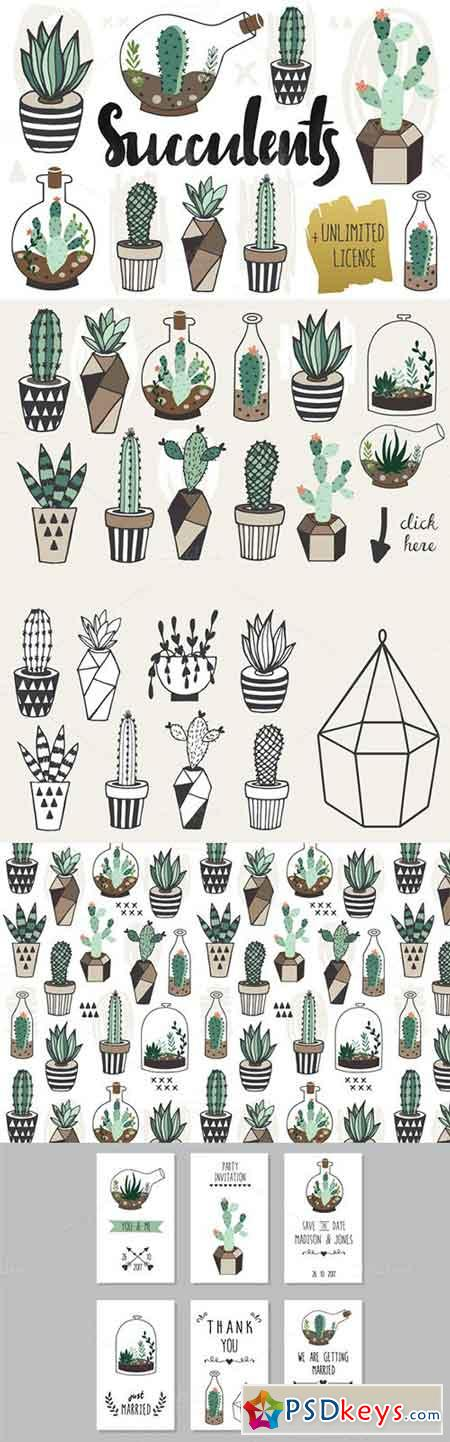 Succulents +Unlimited License 319899