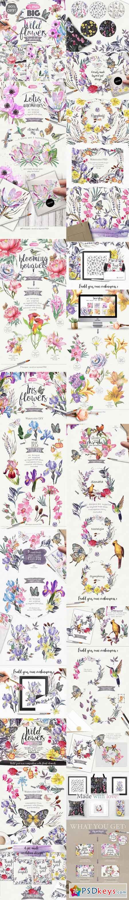 Wild flower pack 75 751352