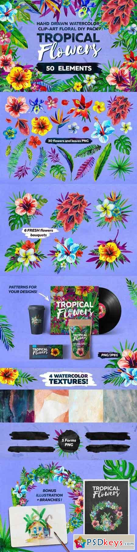 Watercolor Tropical Flowers 699683