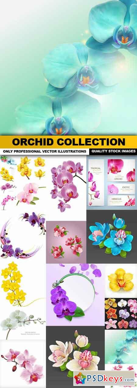 Orchid Collection - 20 Vector