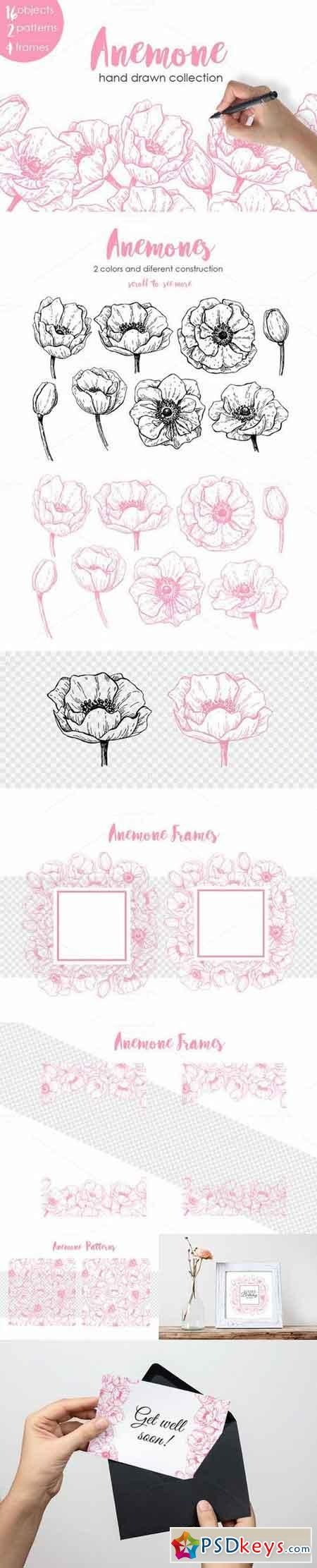 Anemone. Hand Drawn Flower Set 708710
