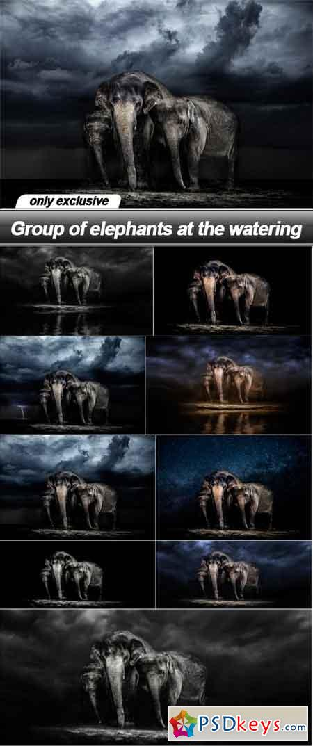 Group of elephants at the watering - 9 UHQ JPEG