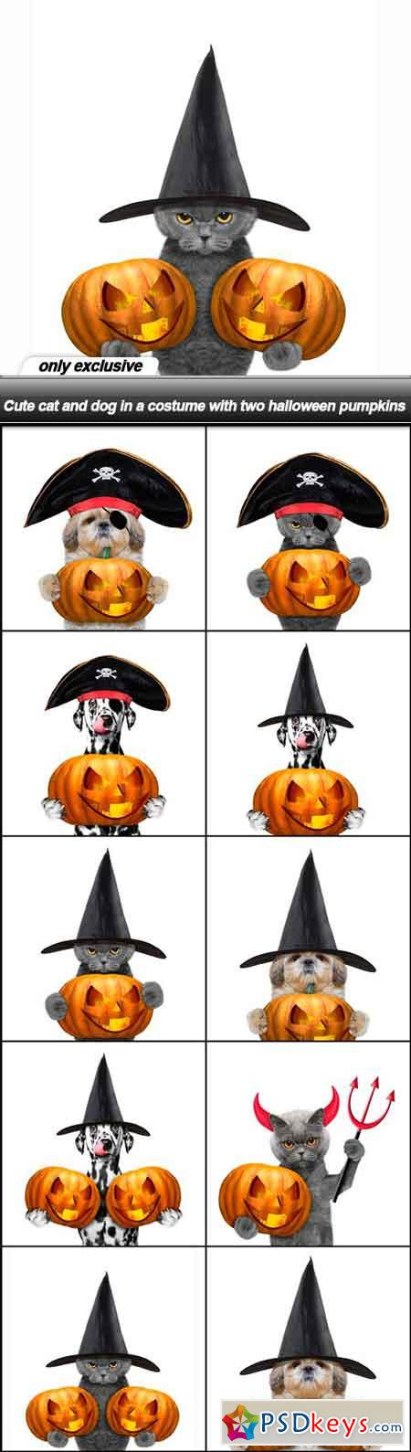 Cute cat and dog in a costume with two halloween pumpkins - 10 UHQ JPEG