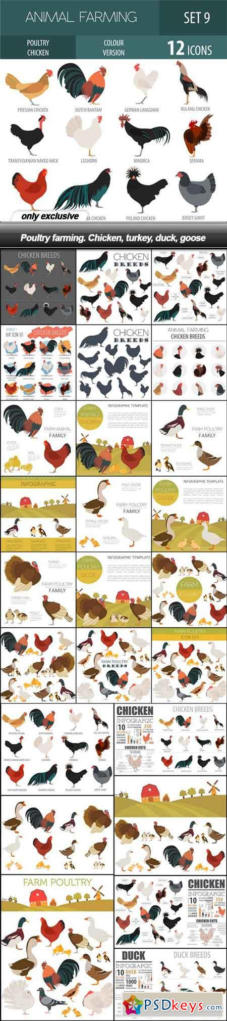 Poultry farming. Chicken, turkey, duck, goose - 26 EPS