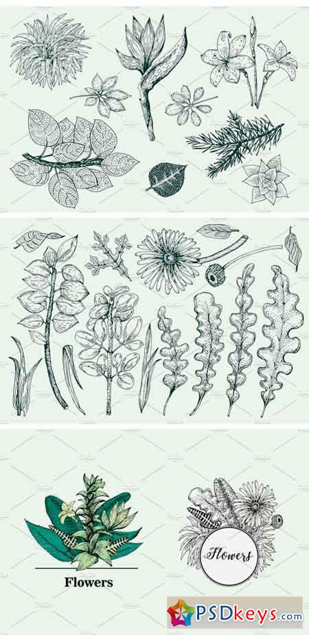 Vector Botany Collection 1275900