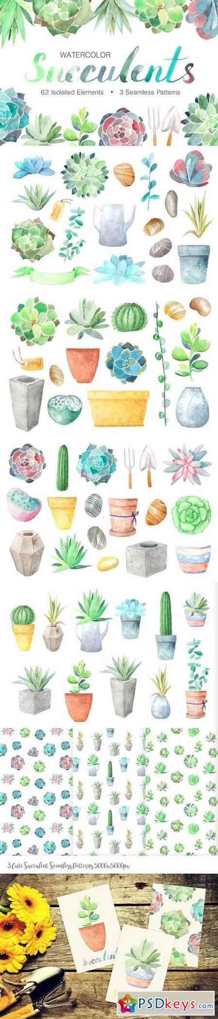 Watercolor Succulents Collection 1254088