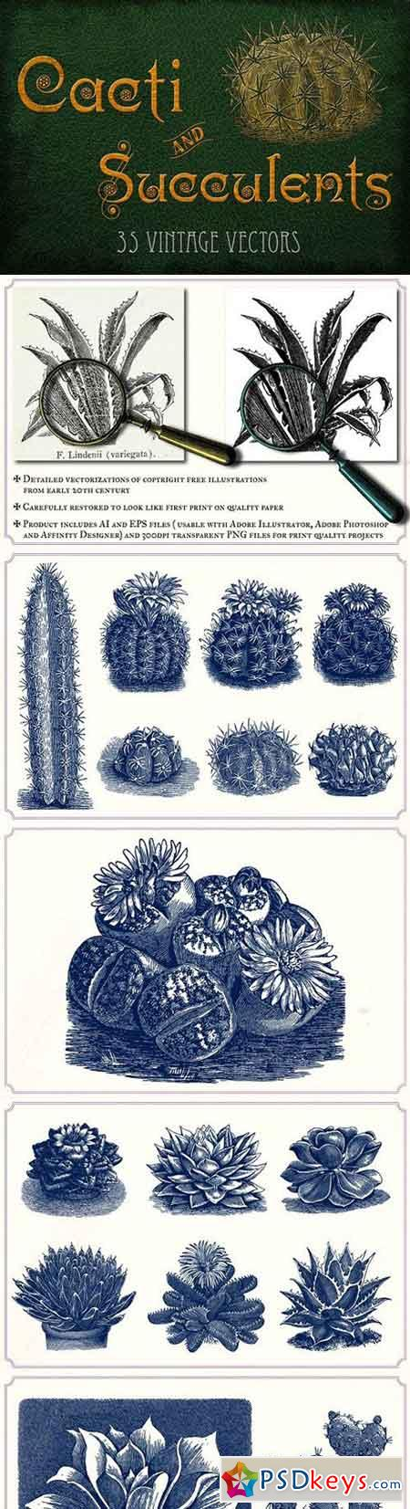 Vintage Cacti and Succulents 1288797