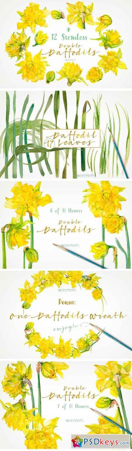 Double Daffodils 1340329