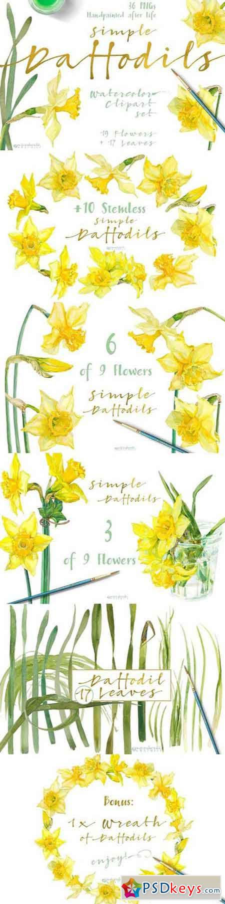 Simple Daffodils 1343602