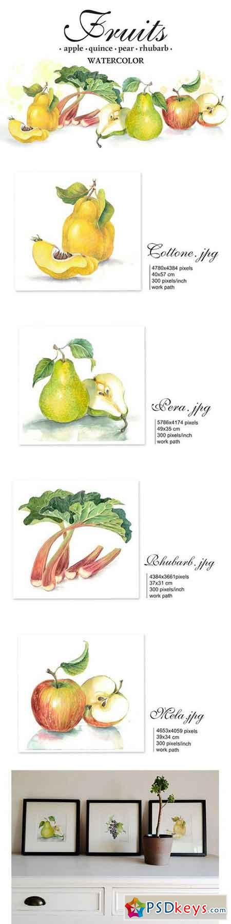 Set of 4 watercolor Fruits 1354716